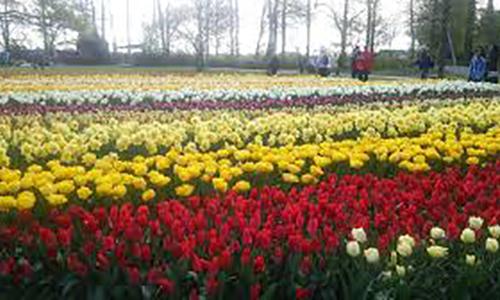 【オランダ】春の花々と美術に浸る旅!直行便利用のオランダ6日間