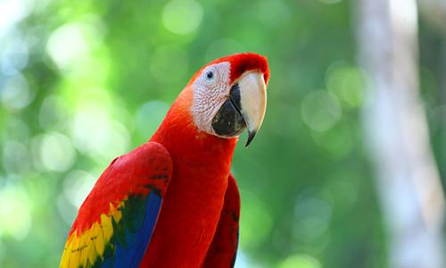 【コスタリカ】動植物と大自然を感じるコスタリカ周遊 8日間